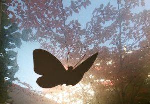 Bild DELPHI Entwicklungsbegleitung in Weinheim Schmetterling