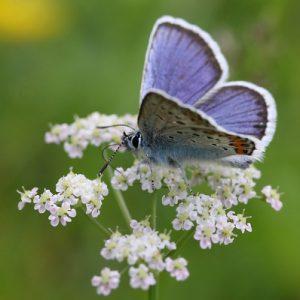 Bild Entwicklungsbegleitung in Weinheim Schmetterling
